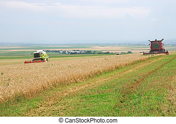 Harvest time, Combine harvester working in a cereal field