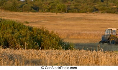 Harvest time - View of wheat field and tractor with trailer...