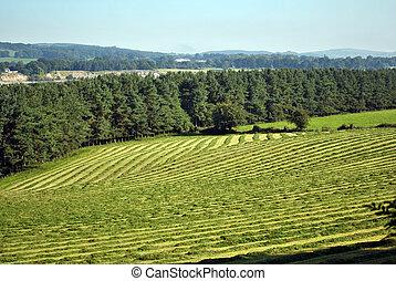 harvest time - green field at harvestime