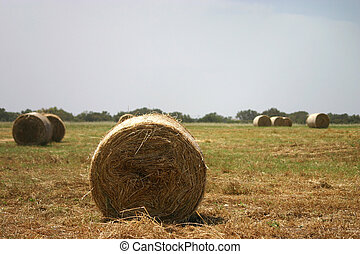 Harvest Time - Hay stacks ready to be picked up