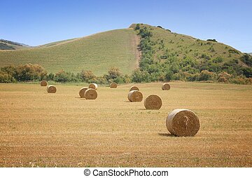 Harvest time in Italy - hay bales on a field in Basilicata ...