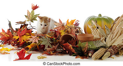 Harvest Time Kitty