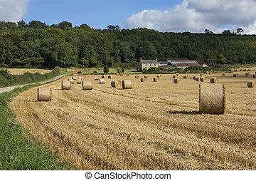 Harvest Time - North Yorkshire - England