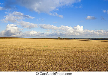 harvest time scenery - a harvested field in the yorkshire...