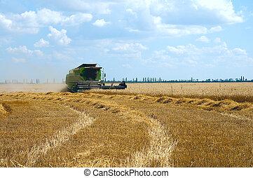 harvest time. south Ukraine