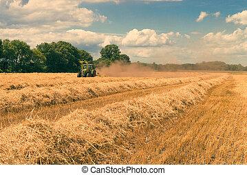 harvest time - vintage