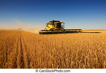 Harvest work - A modern combine harvester working a wheat...