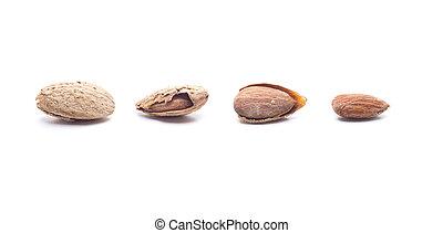 harvested almonds panorama