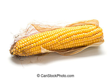 harvested corn 2