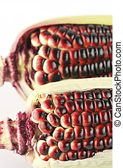 Harvested corn in red and purple colors