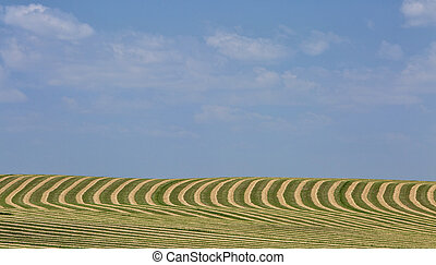 harvested field landscape