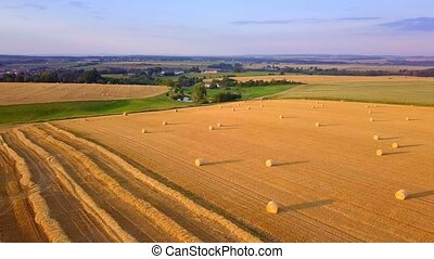 harvested field with straw bales in summer - Summer...