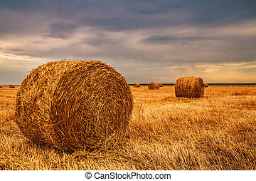 harvested field with straw bales in sundown before the rain