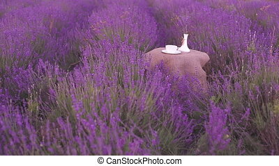 Harvested lavender flowers.