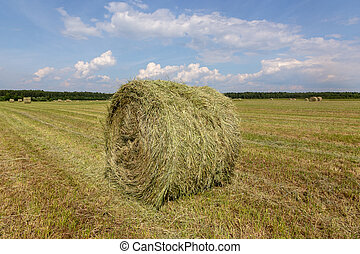 Harvested, mowed grass. Rolled-up hay.