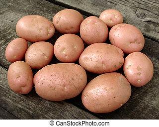 harvested potato tubers