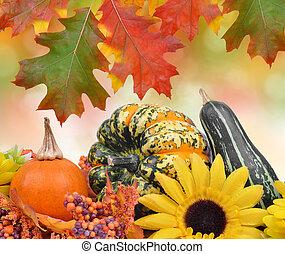Harvested pumpkins -  pumpkins on autumnal background