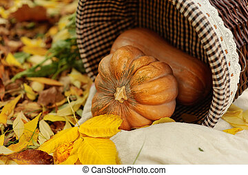 Harvested pumpkins with fall leaves - Colorful squash and...