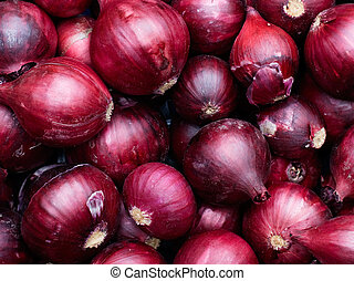 Harvested Red Onions in container