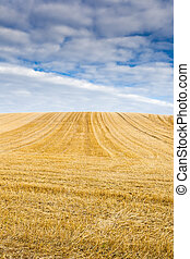 Harvested stubble fields with blue sky and clouds
