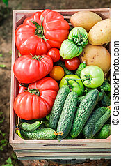 Harvested tomatoes and cucumbers in wooden box