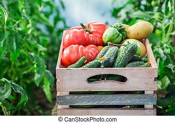 Harvested vegetables in greenhouse