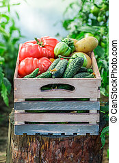 Harvested vegetables in wooden box
