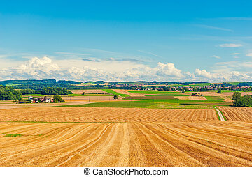 Harvested wheat field in the end of summer