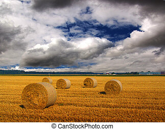 Harvested wheat waiting to being stored before the storm -...