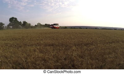 Harvester collects wheat on the field.