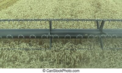 Harvester combine during harvesting of cereals, detail