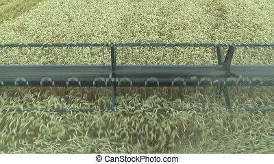 Harvester combine during harvesting of cereals, detail,...