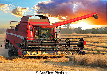 Harvester combine in wheat field