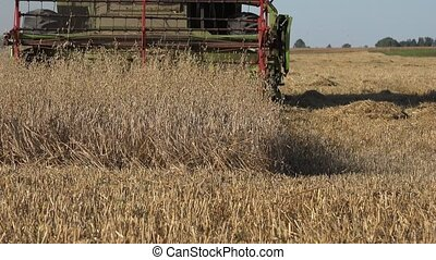 harvester combine machine blades cutting ripe oat ears in farm agriculture field. 4K