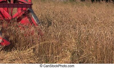 harvester cut wheat plant