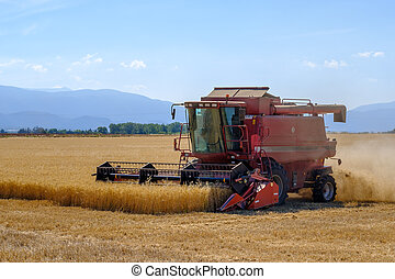 Harvester gathers the wheat crop