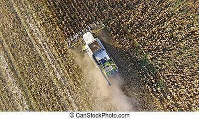 Harvester harvests corn. Collect corn cobs with the help of a combine harvester. Ripe corn on the field.