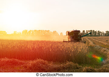 Harvester in the field lit by the setting sun. Harvesting campaign. Photo with rainbow artifacts from the lens.