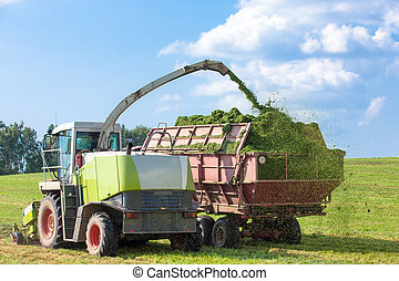 Harvester loading Silage - Harvester cutting field, loading...