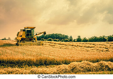 Harvester machine on a field
