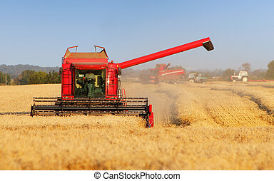 Harvester machine on wheat field