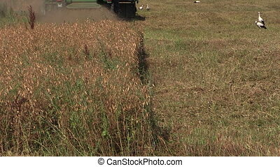 Harvester machine trash - Dry pea plants and harvester...