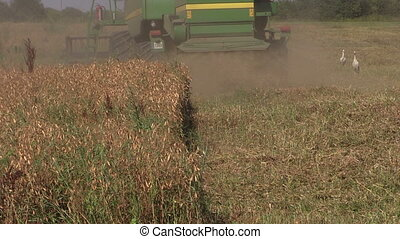 Harvester machine trash peas plants in agricultural field in...