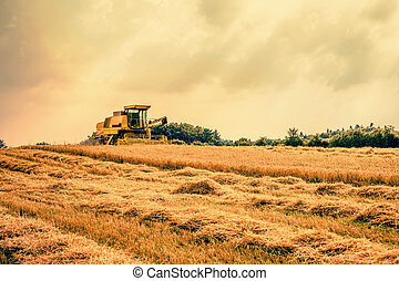 Harvester on a dry field