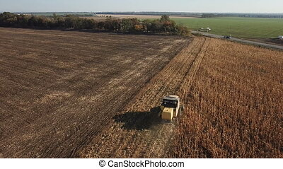 Harvester removes corn in the field - Harvester collects...