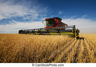 Harvester - modern combine harvester working on a wheat crop