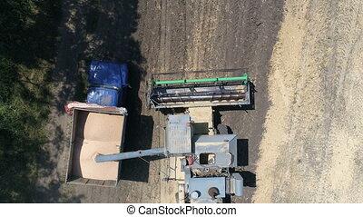 Harvester unloads grain. Aerial video - Old harvester...