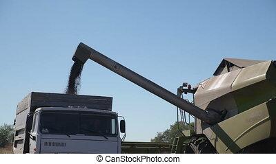 Harvester Unloads Grain