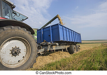 Harvester unloads wheat