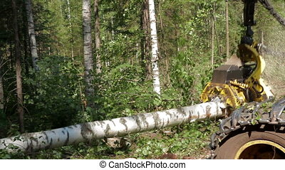 Harvester pulls tree - Harvester working in a forest....